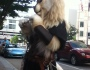 Furries, The Other F-Word. An OutsidersView